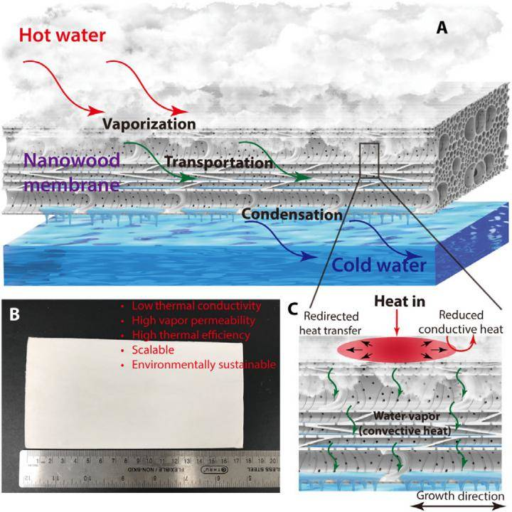 RESEARCH: 'Nanowood' membrane is 20% more efficient, finds study